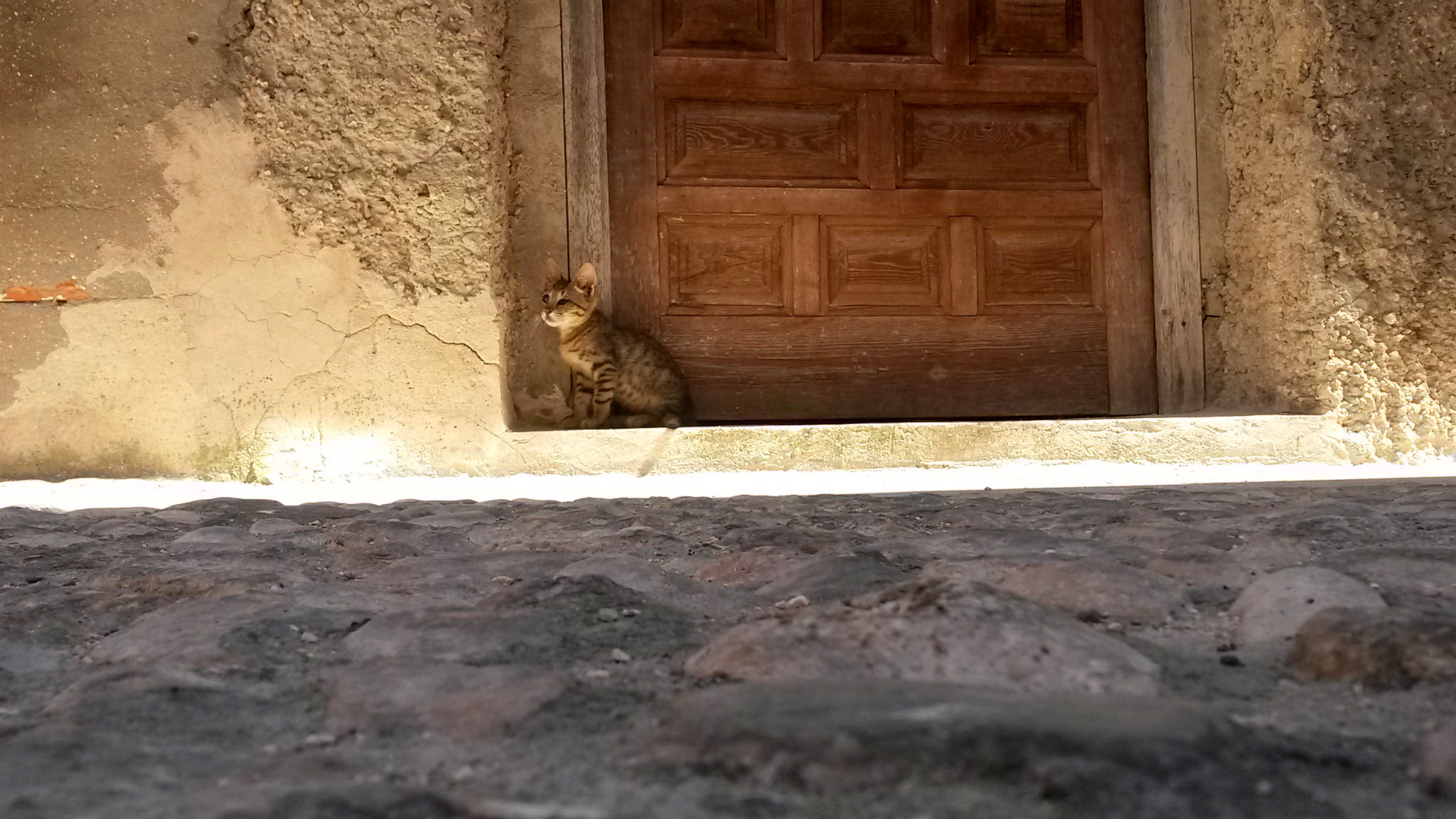 humanlike.co animals blind cat in doorway