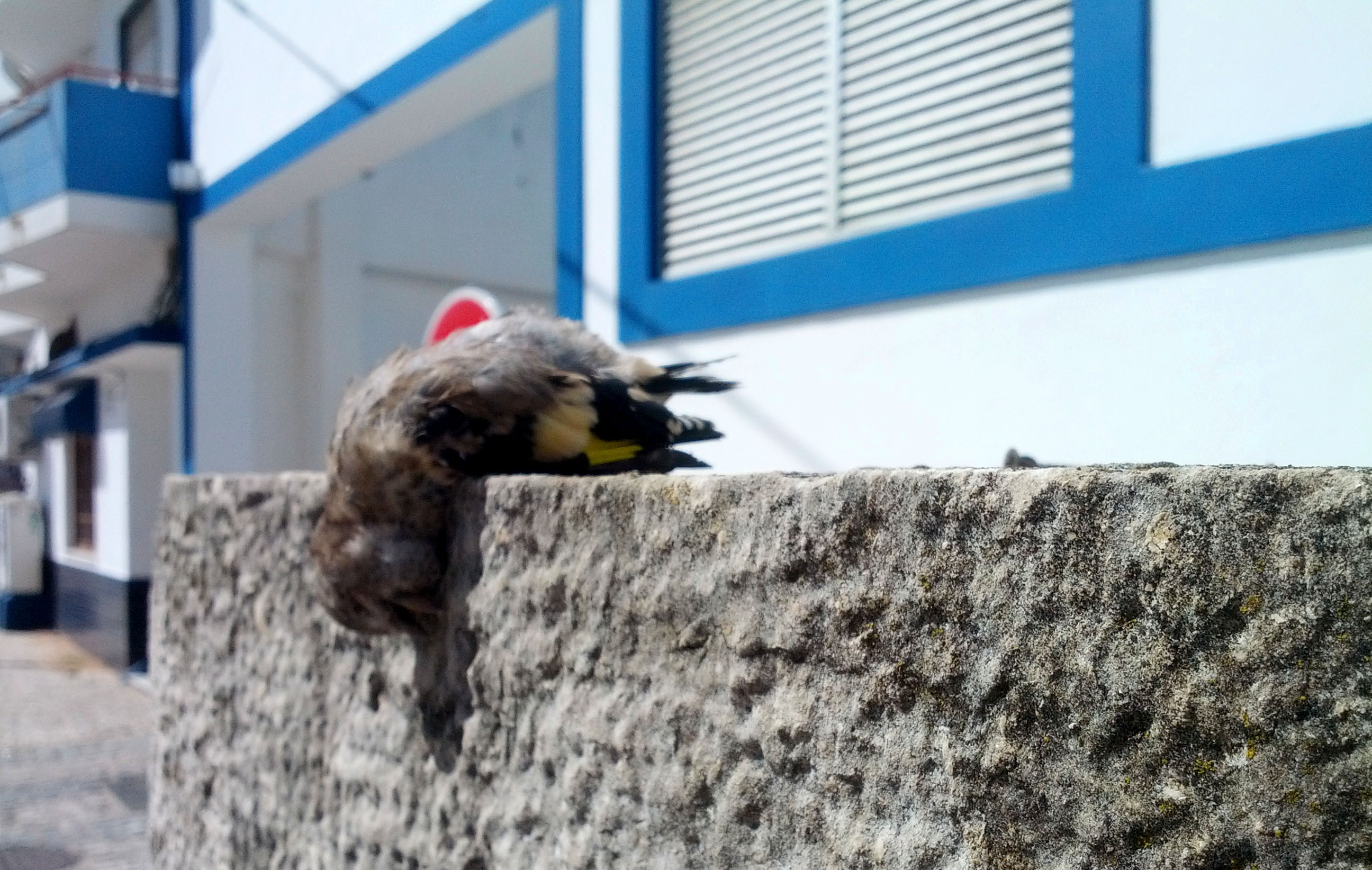 humanlike.co animals dead bird on wall