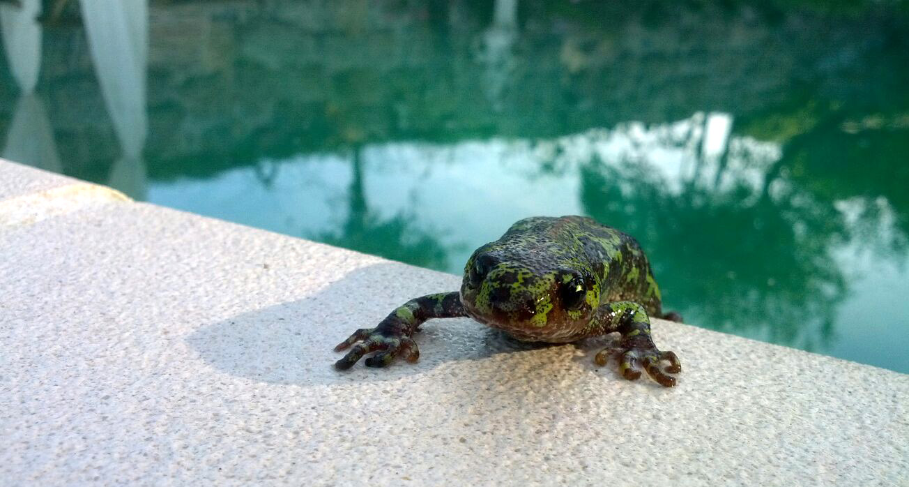humanlike.co animals salamander on pool ledge