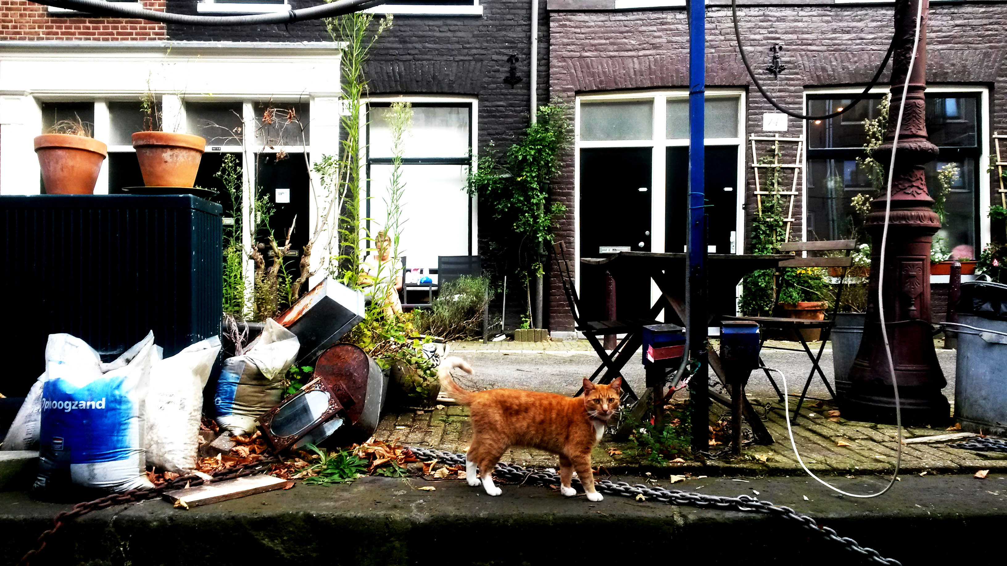 humanlike.co animals cat along canal amsterdam