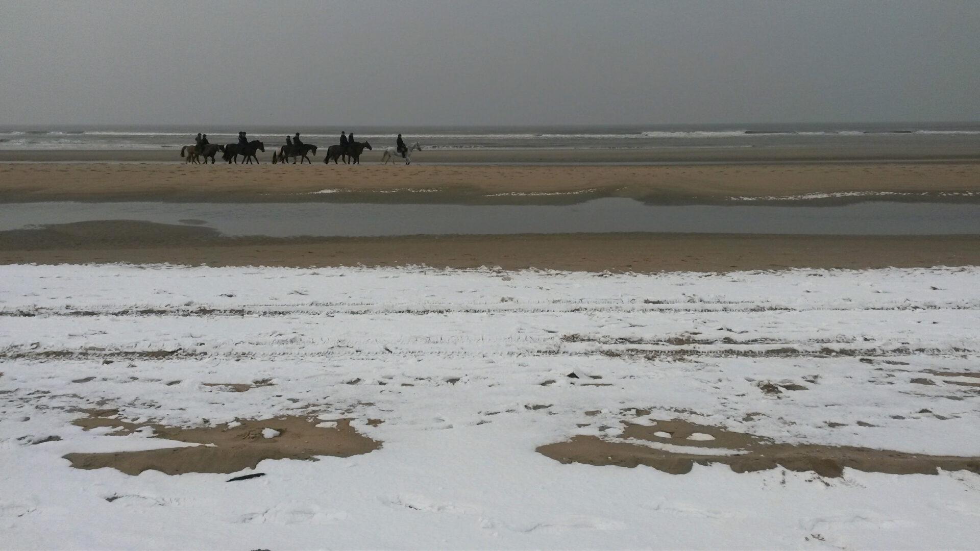 humanlike.co horses snowy beach bloemendaal