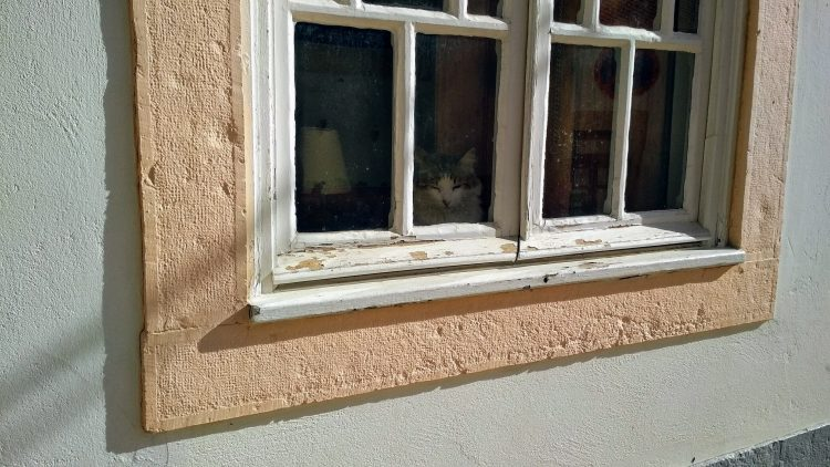 humanlike.co animals window sill cat silves