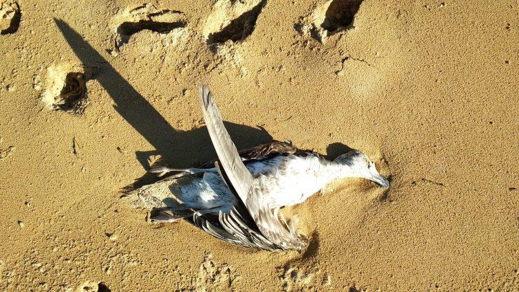 humanlike.co animals dead bird on beach